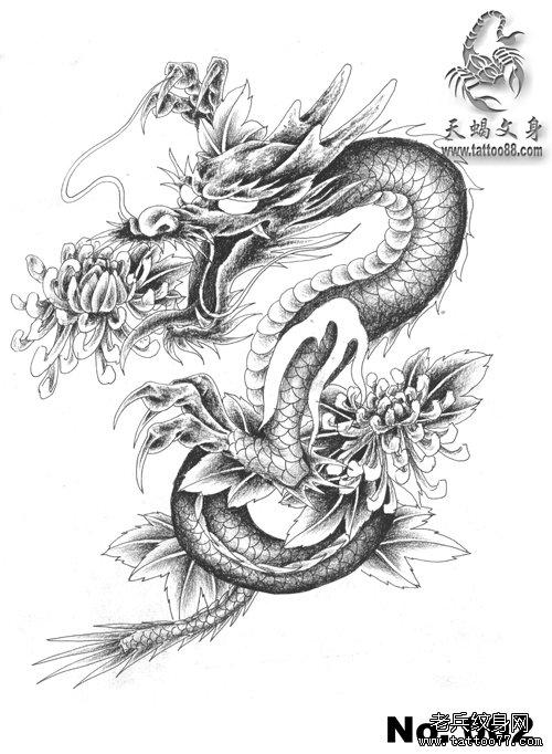 一款披肩龙与菊花纹身手稿