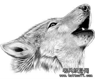 狼纹身图案的讲究(图文)