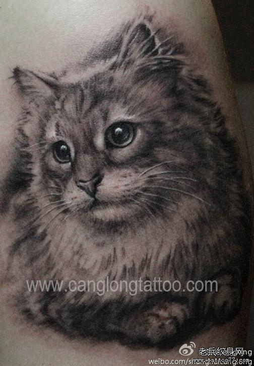分享一款可爱小猫咪纹身图案
