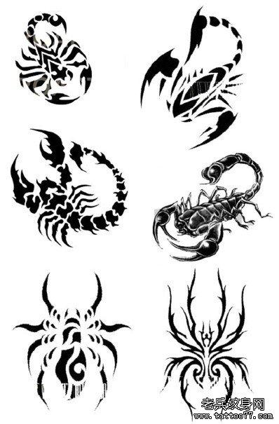 武汉纹身网推荐一组蝎子蜘蛛纹身图案