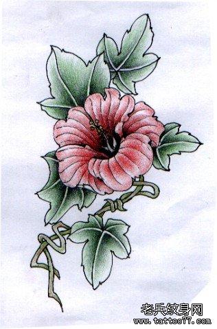 喇叭花花卉文身手稿图案由武汉刺青店推荐