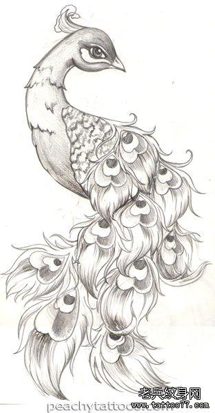 一组孔雀纹身手稿图案由武汉纹身提供