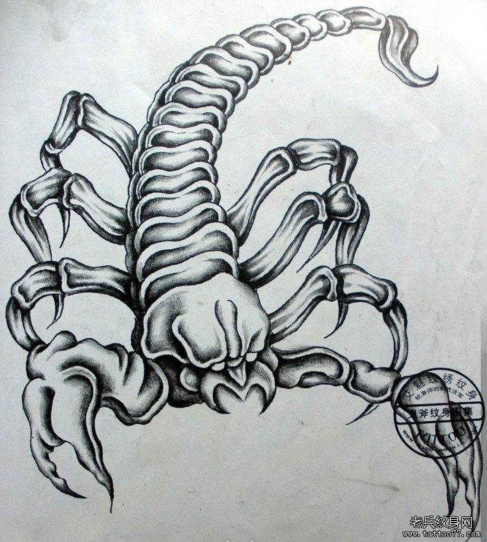 儿童简单画动物蝎子