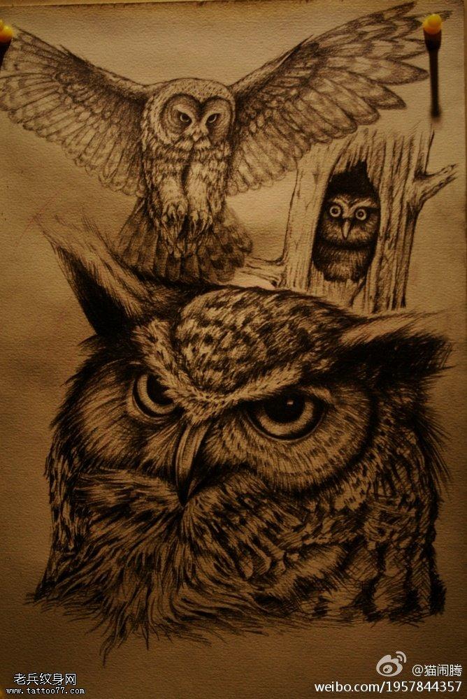 黑灰猫头鹰老鹰纹身手稿图案由武汉纹身提供图片
