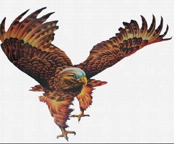纹老鹰有什么讲究 生活常识花鸟鱼虫