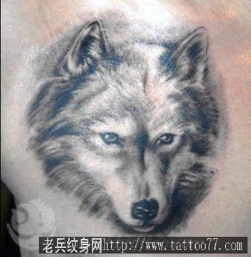 动物纹身图案大全tag标签_武汉纹身店之家:老兵纹身店