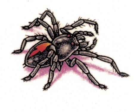蜘蛛图案纹身